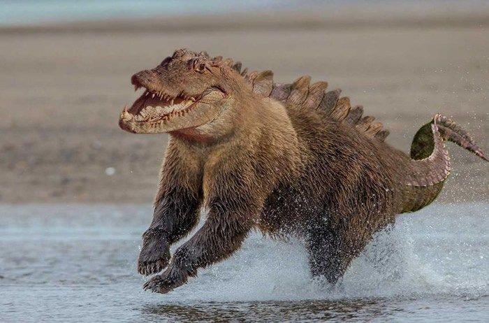 bear crocodile
