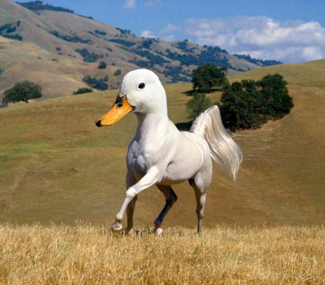 Duck Horse