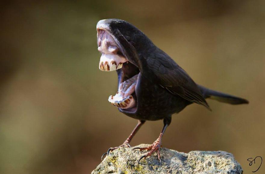 Wierd Monkey Bird