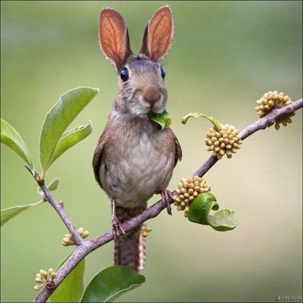 Rabbit Bird