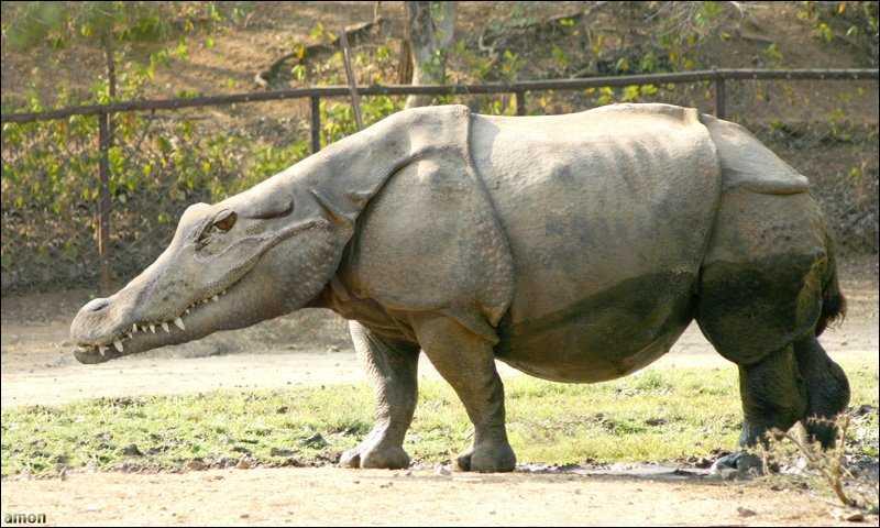 Rhino Crocodile