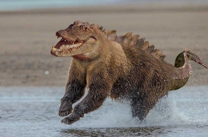bear crocodile