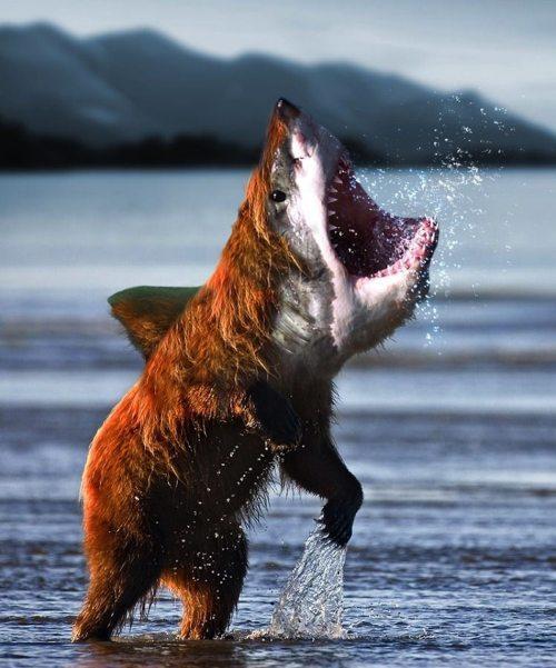 Bear Shark