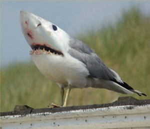 shark bird