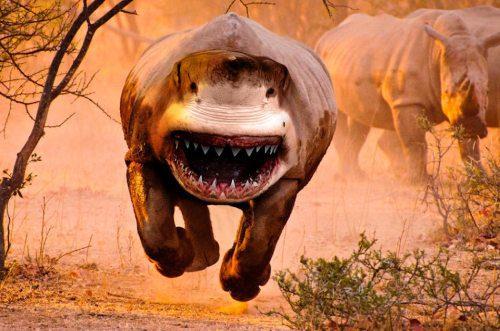 Shark Rhino